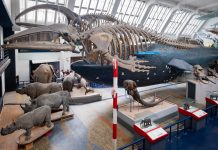 The Mammals Gallery at the Natural History Museum in London